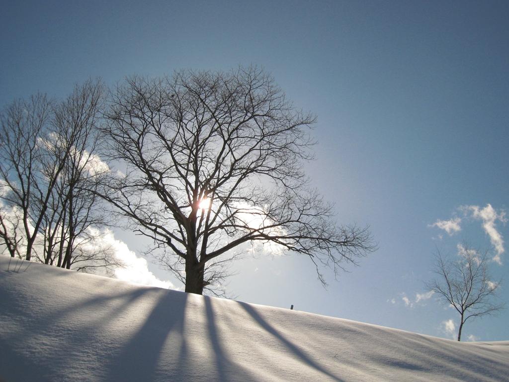 冬の画像12