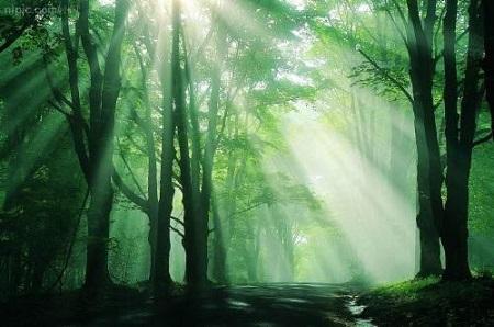 森林の画像 6