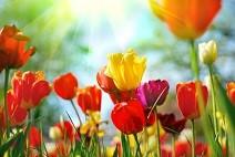 field-flowers